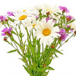 Bouquet chamomiles and cornflowers - Stock Photo
