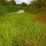The swamp — Stock Photo #24136571