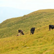 Mountain pasture — Stock Photo