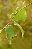Green caterpillar — Stock Photo
