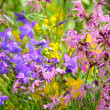 Colorful meadow flowers — Foto Stock