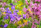 Colorful meadow flowers — Stockfoto