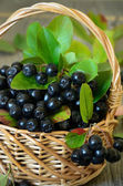 Black chokeberry in the basket — Stock Photo