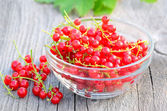 Red currants in glass bowl — Stock Photo