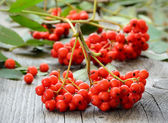 Rowanberry on the table — Stock Photo