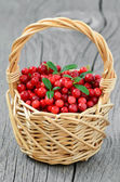 Cowberries in the basket — Stock Photo