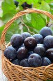 Ripe plums in basket — Stock Photo