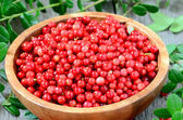 Cowberries in brown bowl — Stock Photo