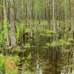 The swamp — Stock Photo #37961665