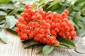 Rowanberry on table — Stock Photo