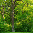 Tree in the spring park — Stockfoto #39159651