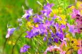 Colorful meadow flowers — Stock Photo