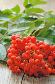 Rowanberry on table — Stock Photo