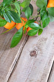 Branch of tangerines on table — Stock Photo