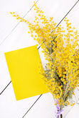 Empty card and mimosa flowers  — Stock Photo