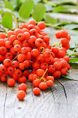 Rowanberry on the wooden table — Stock Photo