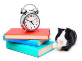 Alarm clock, guinea pig and books . — Stock Photo