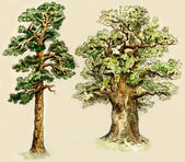 Pine and oak trees — Stock Photo
