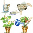 Stock Photo: Planting tomato illustrations set