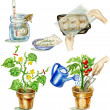 Planting tomato illustrations set — Foto Stock #20463013