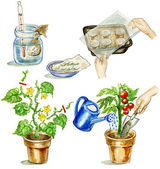 Planting tomato illustrations set — Stock Photo