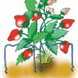 Stock Vector: Ripe red strawberry plant