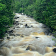 River Flowing Through the Forest — Stock Photo
