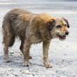 Stock Photo: Abandoned dog