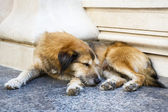 Sleeping stray dog — Stock Photo