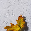 Stock Photo: Water drops and leaf on glass