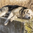 Dog loneliness — Stockfoto