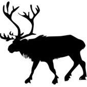Reindeer_7 — Stock Photo