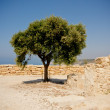 Stock Photo: Lone tree in sun