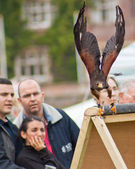 Public watching a Harris Hawk — Stock Photo
