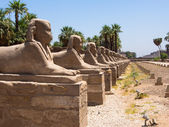The avenue of Sphinx at Luxor Temple, Egypt — Stock Photo