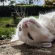 Stock Photo: Wild White Cat