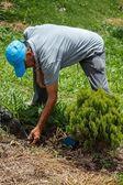 Man Working on Garden — Stock Photo