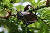 Giant Beetle Stand Over a Tree Branch — Stock Photo