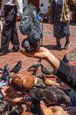 Doves Feed on Hand Closeup — Stock Photo