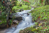 Country Forest Scapes — Stock Photo