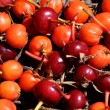 Stock Photo: RED BERRIES
