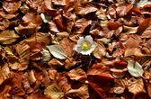 Witte bloem in de herfst — Stockfoto