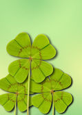 Clover with four leaves — Stock Photo