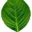 Leaf — Stock Photo #30324277
