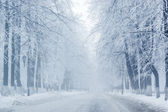 Winter trees on snow in hazy park with long white road — Stock Photo