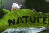 природа — Стоковое фото