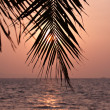 Palm leaves silhouette — Stock Photo