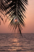 Palm leaves silhouette — Photo