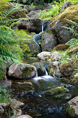 Stream with rocks in tropical forest — Stock Photo