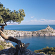 Juniper tree on rocky coast of Black sea - Stock Photo